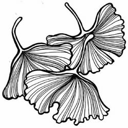 How to Draw Ginkgo Leaves Step by Step