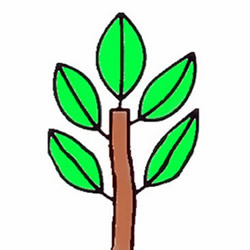 How to Draw a Little Sapling Step by Step for Kids