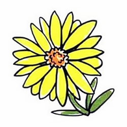 How to Draw a Yellow Chrysanthemum Step by Step for Kids