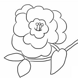 How to Draw a Camellia Flower Step by Step for Beginners