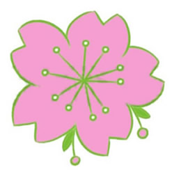 How to Draw a Pink Cherry Blossom Step by Step for Kids