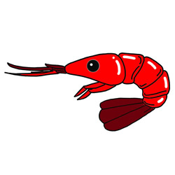 How to Draw a Red Shrimp Step by Step for Kids