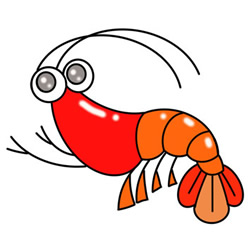 How to Draw a Cartoon Shrimp Easy Step by Step for Kids