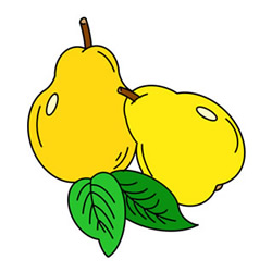 How to Draw Pears Easy Step by Step for Kids