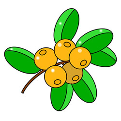 How to Draw Cape Gooseberries Easy Step by Step for Kids