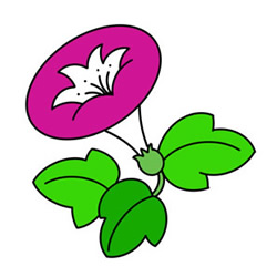 How to Draw a Morning Glory Easy Step by Step for Kids