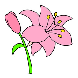 How to Draw a Colored Lily Easy Step by Step for Kids