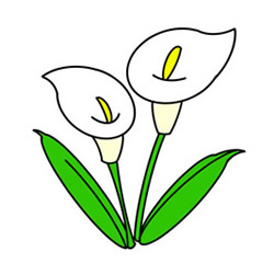 How to Draw Calla Lily Easy Step by Step for Kids
