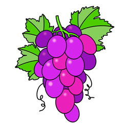 How to Draw a Bunch of Grapes Easy Step by Step for Kids