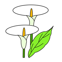 How to Draw Calla Lily Flowers Easy Step by Step for Kids