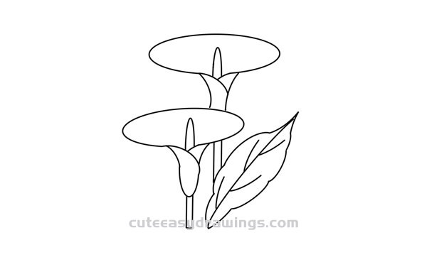 How To Draw Calla Lily Flowers Easy Step By Step For Kids Cute Easy Drawings