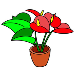 How to Draw a Pot of Anthurium Easy Step by Step for Kids
