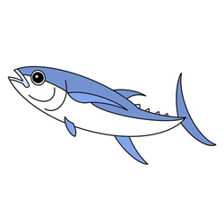 How to Draw a Colored Tuna Easy Step by Step for Kids