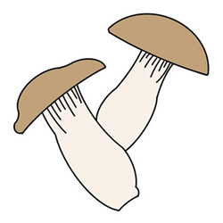 How to Draw a Pleurotus Eryngii Easy Step by Step for Kids