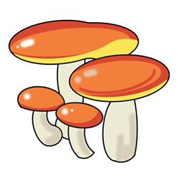 How to Draw a Boletus Easy Step by Step for Kids
