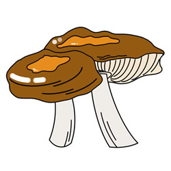 How to Draw a strange Mushroom Easy Step by Step for Kids
