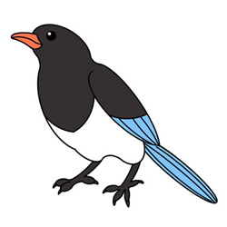 How to Draw a Resting Magpie Easy Step by Step for Kids