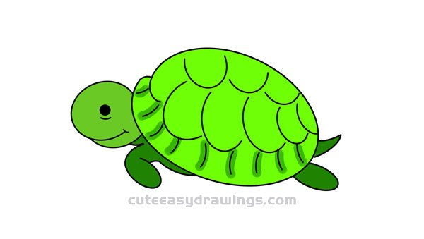 How to Draw a Cute Sea Turtle Easy Step by Step for Kids