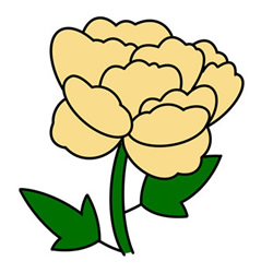 How to Draw a Peony Flower Easy Step by Step for Kids