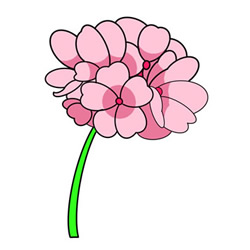 How to Draw Geranium Flower Easy Step by Step for Kids