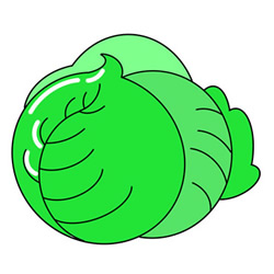 Cabbage Drawing Tutorial Easy for Kids