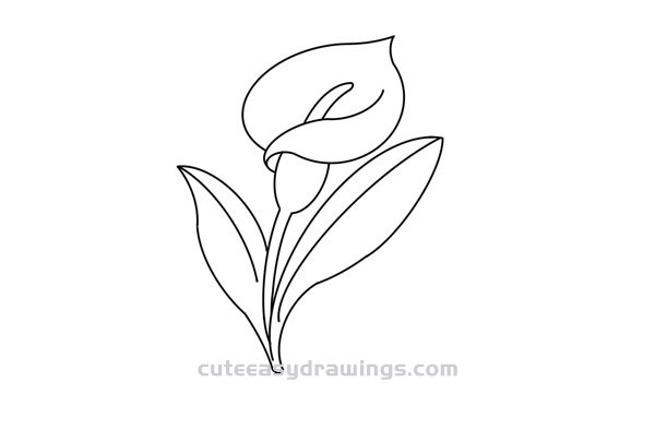 Calla Lily Flower Drawing Easy in Pencil for Kids