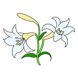 How to Draw Lilies Easy Step by Step for Kids