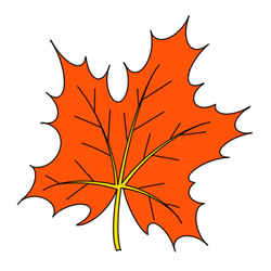 How to Draw an Autumn Maple Leaf Easy Step by Step for Kids