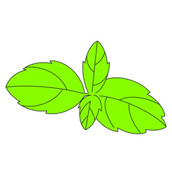How to Draw Mint Leaves Easy Step by Step for Kids
