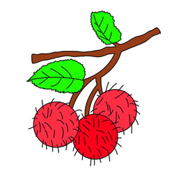 How to Draw Rambutans Easy Step by Step for Kids