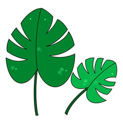 How to Draw Monstera Leaves Easy Step by Step for Kids