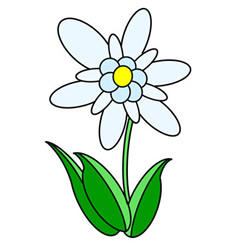 How to Draw Edelweiss Flower Easy Step by Step for Kids
