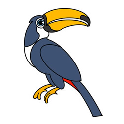 Hornbill Drawing Tutorial Easy for Kids