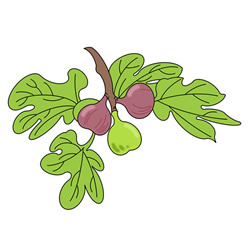 How to Draw Figs on the Tree Easy Step by Step for Kids