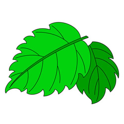 How to Draw Green Leaves Easy Step by Step for Kids