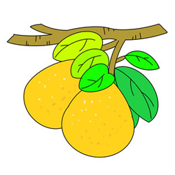 How to Draw Grapefruits on Tree Easy for Kids