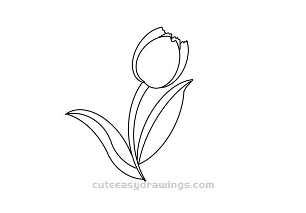 How to Draw a Tulip Flower Easy
