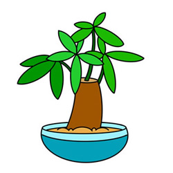 Fortune Tree Bonsai Drawing Step by Step for Kids