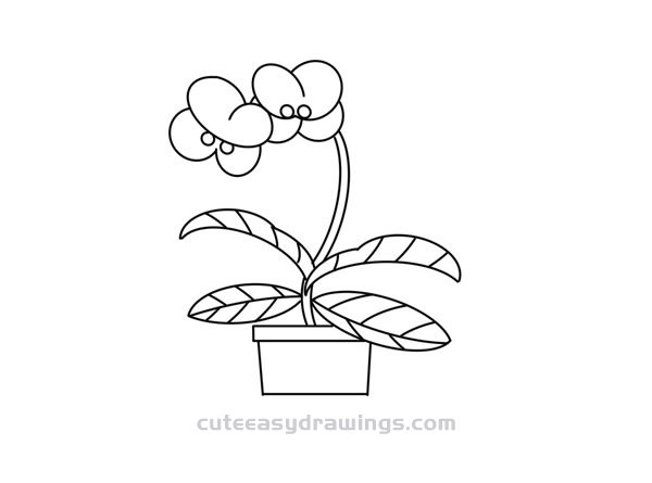 How to Draw a Phalaenopsis Orchid Bonsai Easy for Kids