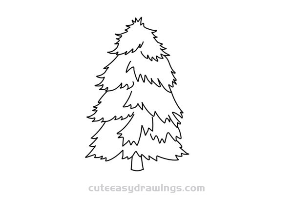 How to Draw a Chinese Fir Easy Step by Step for Kids