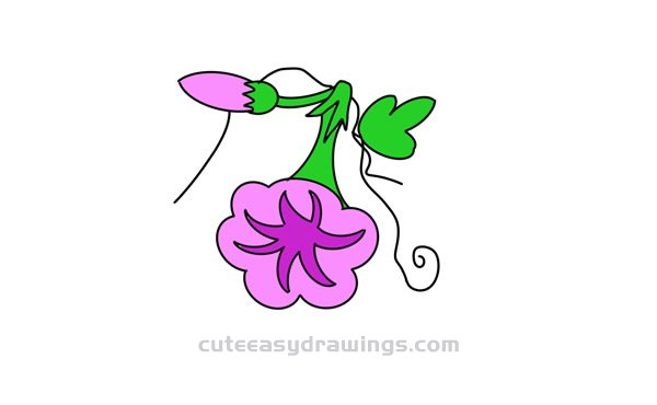 How to Draw a Morning Glory Flower and a Bud Easy