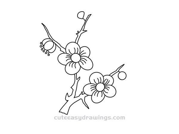 How to Draw Plum Blossom Branchs Easy Step by Step for Kids
