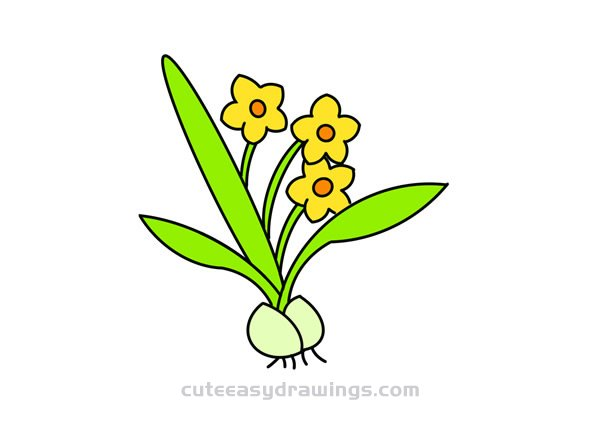 How to Draw a Flowering Daffodil Easy for Kids