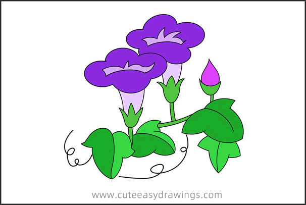 How to Draw a Morning Glory Step by Step