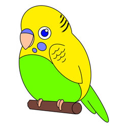 How to Draw a Parakeet Step by Step