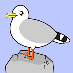 How to Draw a Seagull Standing on a Rock Step by Step