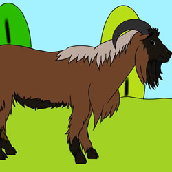 How to Draw a Black Goat Step by Step