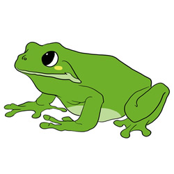How to Draw a Big Frog Step by Step