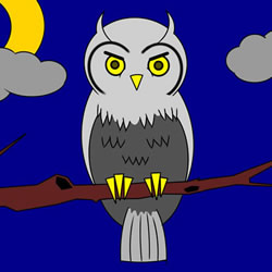 How to Draw a Night Owl Step by Step