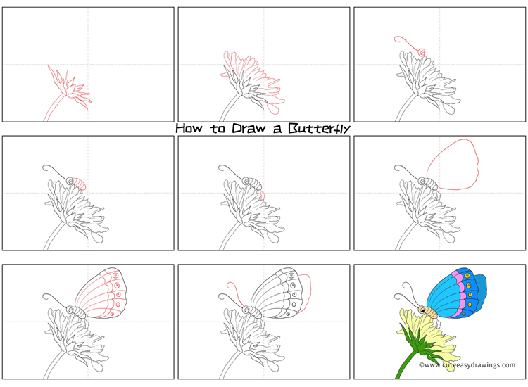How to Draw a Butterfly on Flower Step by Step
